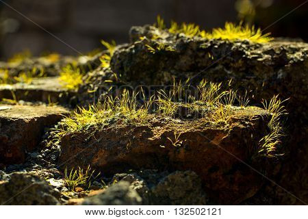 Stones covered with green grass in spring sunny day in forest on ground background
