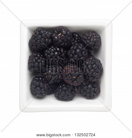 Blackberries in a square bowl isolated on white background
