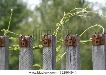 old wooden fence with rusty metal terminations on a background of green