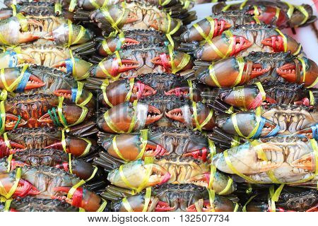 Plenty of living crabs being tie at the market for sell