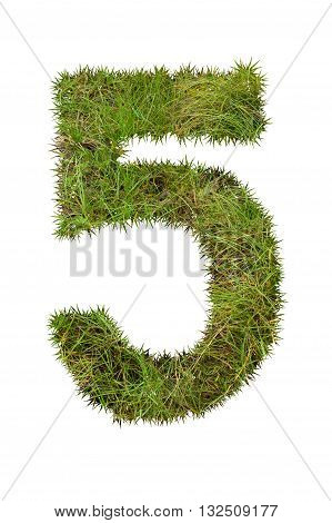 Grass number five, isolated on white background, 5