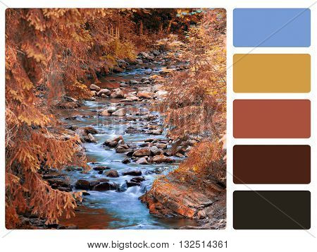 colour palette with complimentary swatches- stock image.