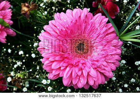 A large pink gerbera flower in a bouquet