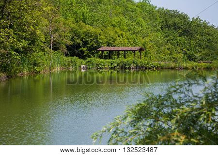 House by the River in the forest canopy