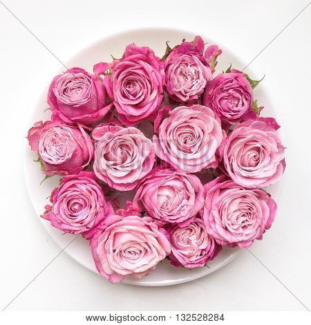 Pink bright roses on a plate on white background. Flat lay top view