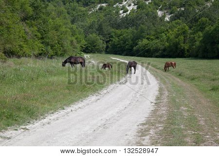 horses graze beside the road and forest and mountains