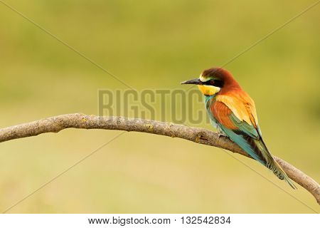 Small bird perched on a branch with a nice plumage