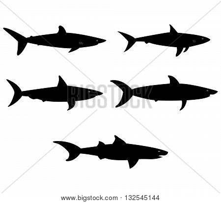 set of sharks illustrated on a white background