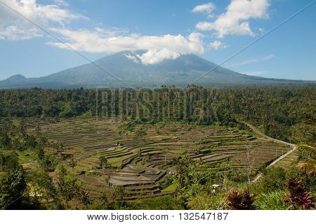 Gunung Batur volcano and rice fields in Bali seen from a hilltop terrace