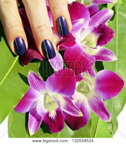 bright colored photo of fingernails with manicure and orchids magenta close up