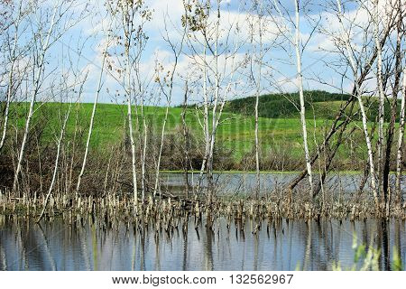 Scenic pond with poplar tree reflections in the water.