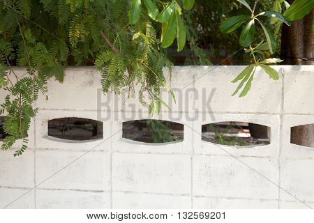 Trees overhanging a white concrete fence on a sunny day. Focus on the foliage blurred fence