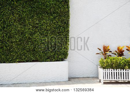 Green hedge and potted plants next to a white wall in a park. Landscaping garden background with copy space