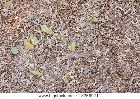 close up sawdust on the ground texture