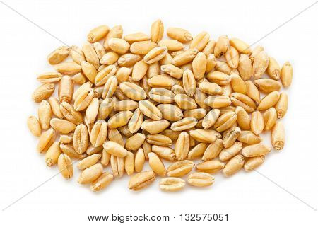 pile of wheat kernels isolated on white.