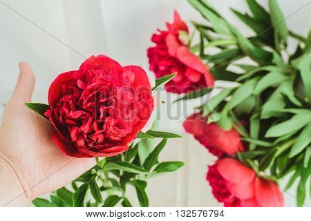 spring-summer concept, a red peony bouquet on a white background