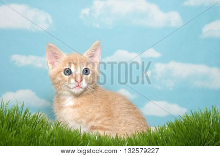 8 week old orange buff tabby kitten in fake grass with blue background and clouds.