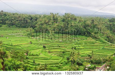 Beautiful aerial view of green terraced rice fields Indonesia