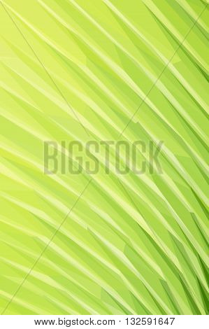 Low poly illustration texture of fresh green palm leaf with vein macro background