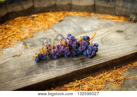 A bunch of grapes left laying on a wooden wine barrel. They are plump purple and blue. Partially dehydrated they are on their way to becoming raisins.
