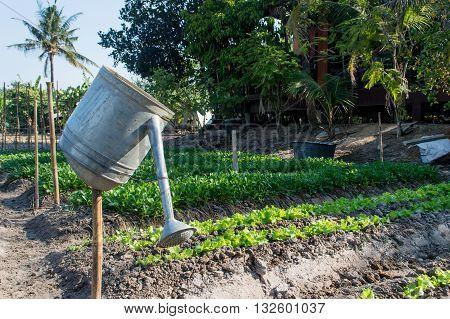 Vegetable garden grow vegetables, salad organic, food