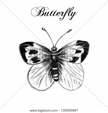 Hand drawn butterfly. Vector llustration. Engraving illustration. Grunge style.