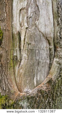 picture of a full frame tree trunk detail