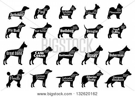 poster of Vector dog breeds silhouettes collection isolated on white. Dog icons collection for cynology pet clinic and pet shop. Dog breeds names and personality description