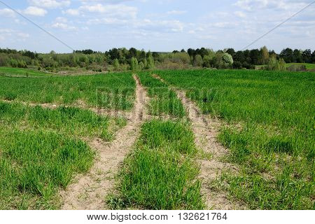 technological track on the agricultural field. spring sprouts