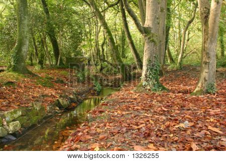 Red Autumn Leaves And A Stream