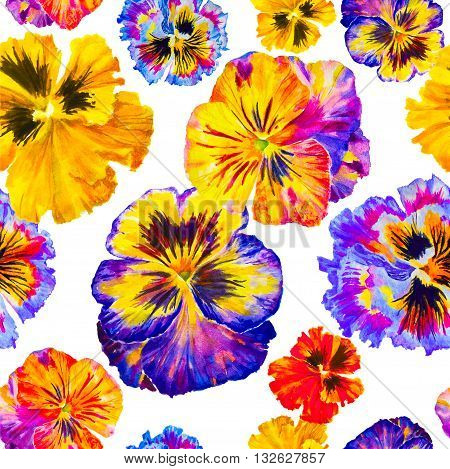 Watercolor floral pattern. Colorful pansies isolated on white background