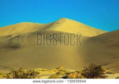 The gentle curves of yellow sand dunes. Dry bushes provide long shadows. Hot autumn in Death Valley, USA