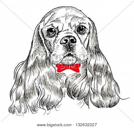 Cocker Spaniel dog portrait. Print and pattern. Hand drawing
