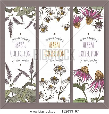 Set of three color vector herbal tea labels with peppermint, chamomile and echinacea based on hand drawn sketch.