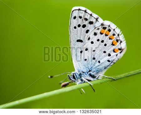 Beautiful Butterfly Sits On A Branch In Spring
