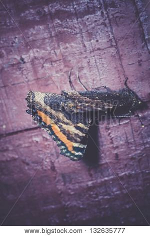 Butterfly On Wooden Plank