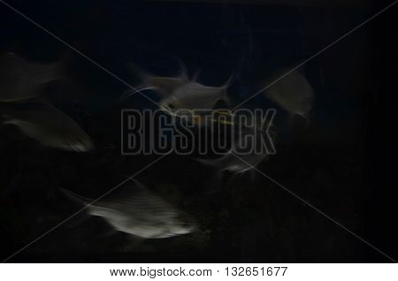 Photo fish obviously a low speed blurs the image is not stable stacking.
