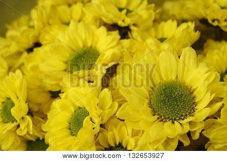 beautiful bouquet of bright yellow chrysanthemums horizontal