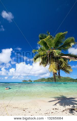 Palm Tree Hanging Over Beach