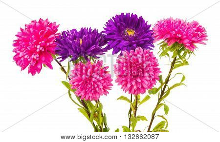 florescence, flower aster isolated on white background