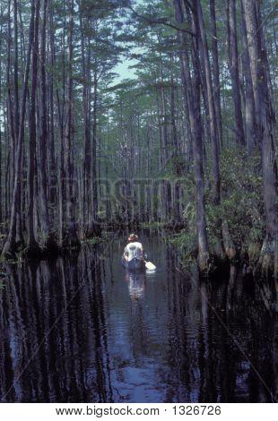 Bosque de cipreses
