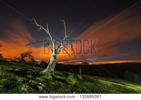 Hangman's tree ilumintaed at night with torches