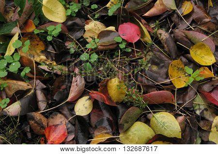 Autumn Rotten Leaves