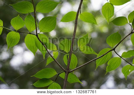 Leaves of Relaxation. A relaxing image featuring the canopy of a tree.