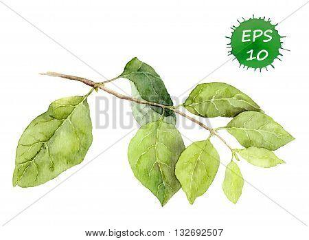 Watercolor green tree branch, natural and vivid