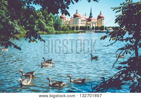 Moritzburg Castle at spring day with graylag geese, Germany