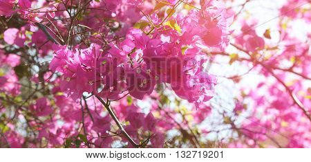 Beautiful pink flowers with the leaves in the sunshine
