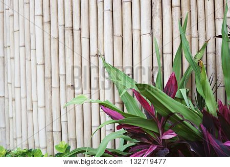 Bamboo wall with greenery in the front