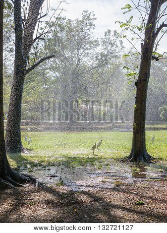 Egret bird play water in public park