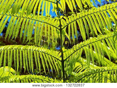 Green fern background makes for cool background.
